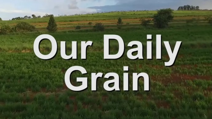 Our Daily Grain