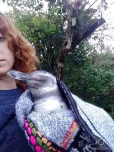 Juventude pela Paz Florianópolis Pinguim