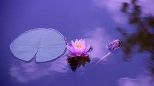 São - equilíbrio Lotus