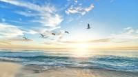 Céu praia pássaros arte