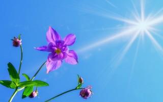 Flor divina