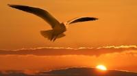 Energia espiritual - Pomba no por do sol